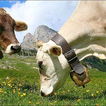 Warum sich Fleisch mit Bio-Siegel lohnt