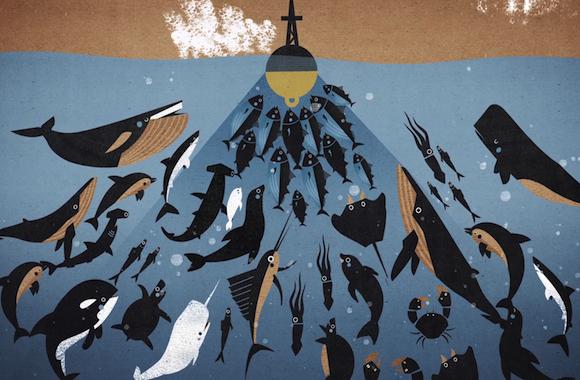 Fisch mit gutem Gewissen: Followfish aus nachhaltiger Fischerei mit MSC Siegel