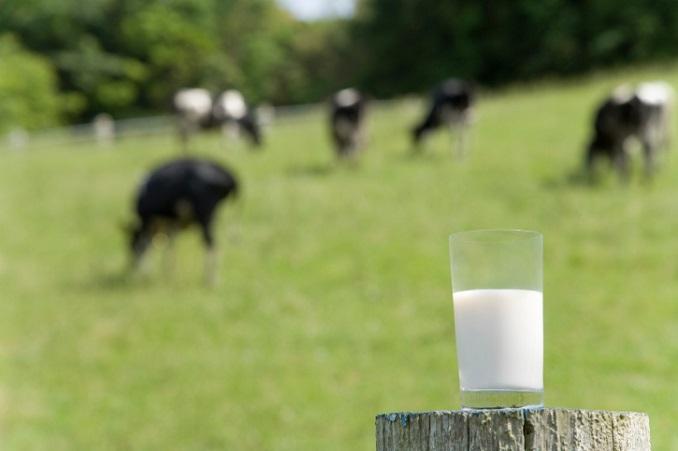 Milch hat eine wichtige Bedeutung in der Landwirtschaft  © whitetag/iStock/Thinkstock