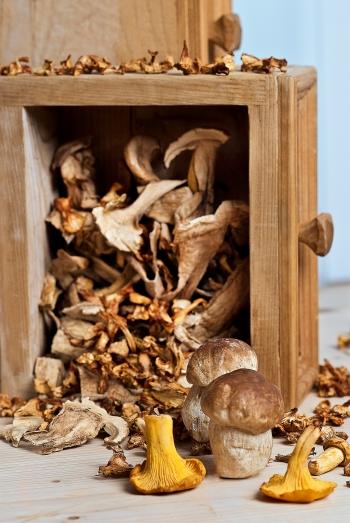 Dörren und trocknen: Buch erklärt Anleitung zum Pilze trocknen und Rezepte
