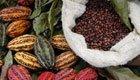 Zu heiß für Schokolade: Droht die große Kakao-Schmelze?