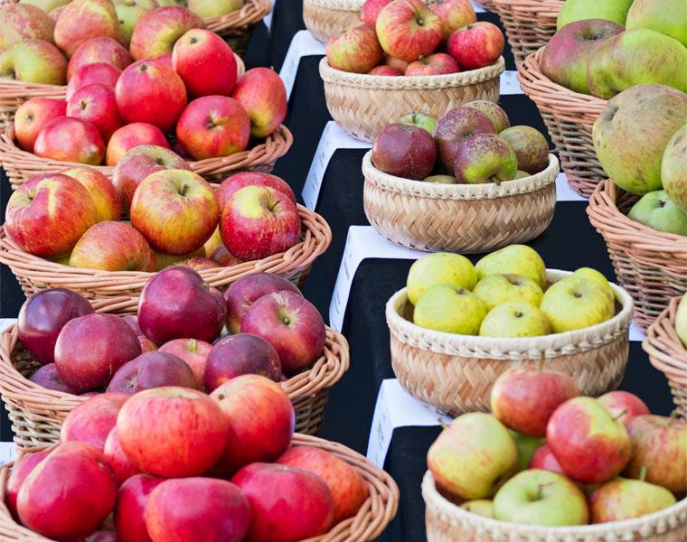 Verschiedene Apfelsorten - Gesund und allergiearm sind alte Apfelsorten.