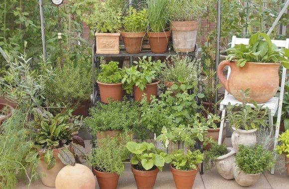 Vertikaler Garten bringt frische Kräuter bei wenig Raum