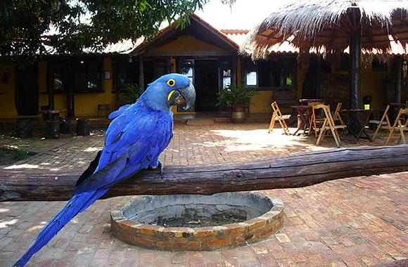 Urlaub im grünen Herzen Brasiliens