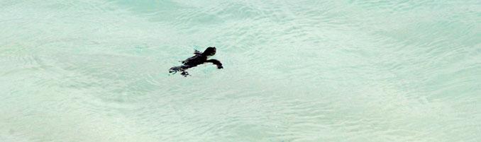 Entspannt dümpelt diese Schildkröte im Wasser