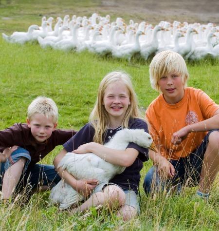 Nachhaltiger Urlaub: Ferien auf dem Bauernhof mit Landservice