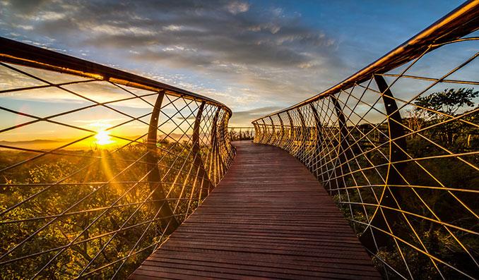Baumschlange in Südafrika bei Sonnenuntergang