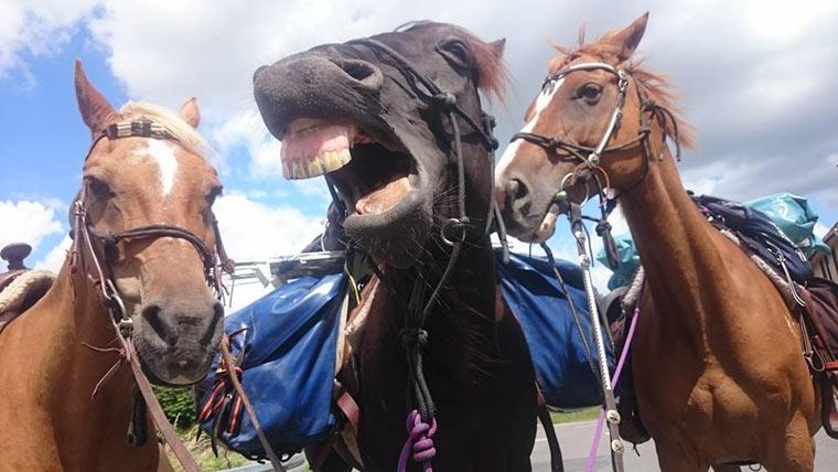 Zwei junge Frauen reisen per Pferd von Berlin nach Spanien