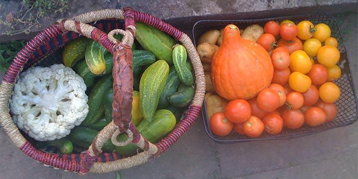 Erntedankfest: Lebensmittelreichtum nicht überall selbstverständlich