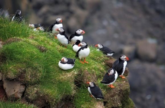 Unvergesslich: Sanfter Tourismus auf den Inseln des Friedens