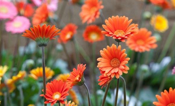 Floriade, Weltexpo für Blumenfreunde: Über 1 Mio. waren schon dort