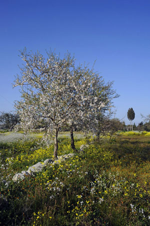 Frühling_in_Apulien