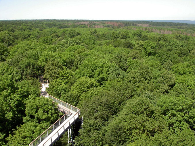 Foto: Fritz Geller-Grimm - Naturpark Hainich