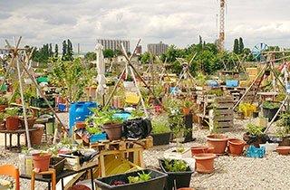 Hafengarten: Urban Gardening in Offenbach