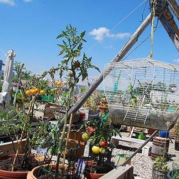Urban Gardening mitten in der Großstadt