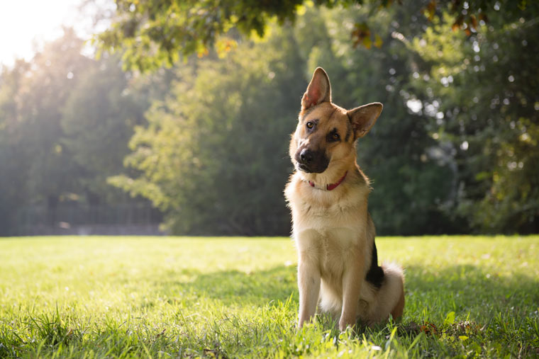 Hundefreundlicher Park