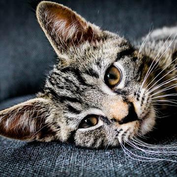 7 Dinge, die wir unseren Katzen nachmachen sollten