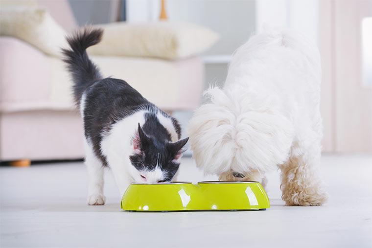 Katze und Hund vor grünem Fressnapf