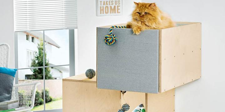 Türchen Nr. 19: Ein Geschenk für Ihre Katze