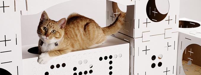 Architektur für Katzen Katzenklo