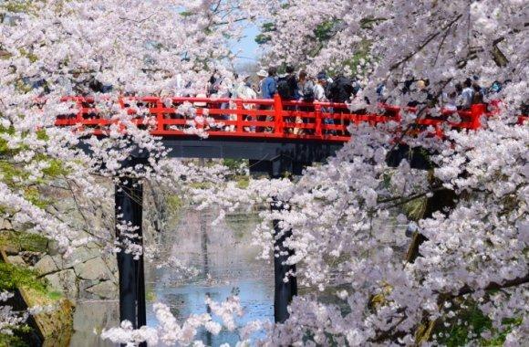 Japanisches Kirschblütenfest in Ludwigshafen