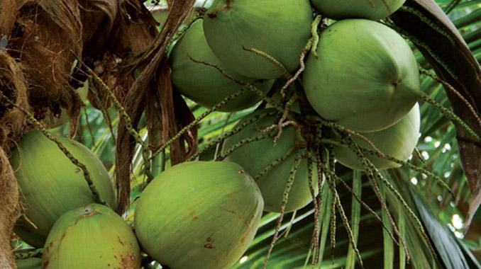 Kokoskohle