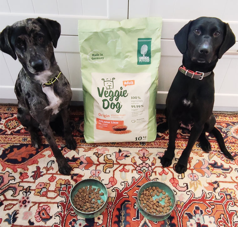 Hunde Lana und Nori