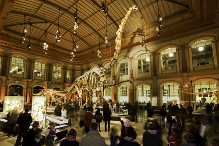 Naturkundemuseeum Berlin Dinosaurier