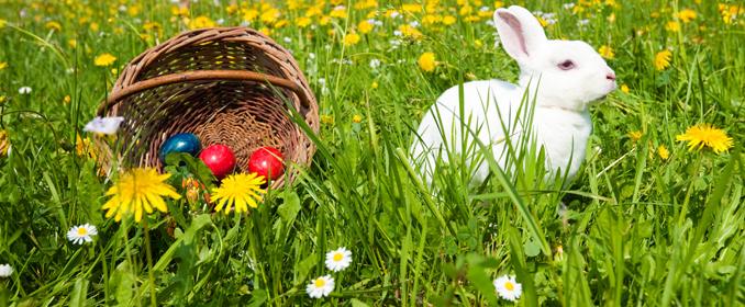 Ostereinest: Fest an Ostern schöne Deko-Ideen