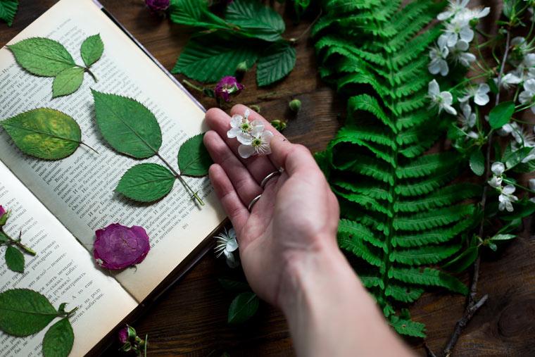 Blüten und Blätter pressen