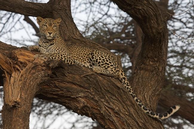 Wie Ökotourismus in Afrika den Menschen, den Tieren und der Umwelt hilft