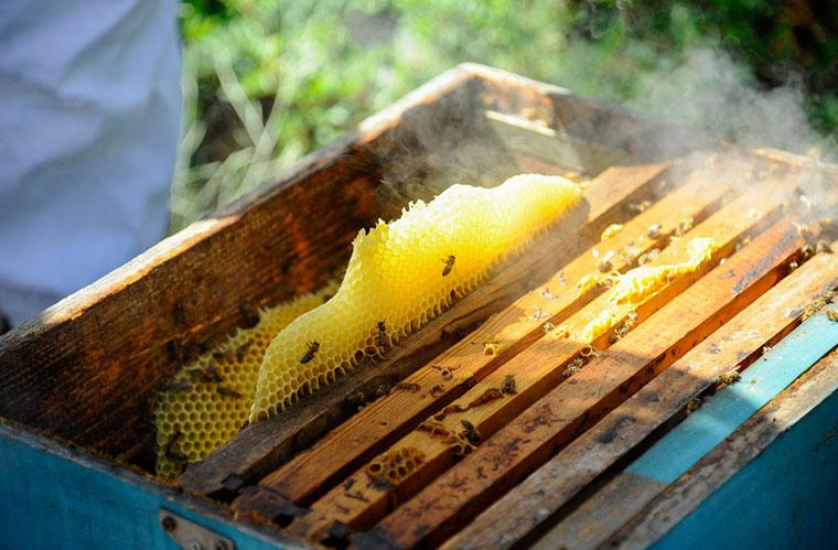 Ein Bienenstock ist eine eigene Welt, in die Gäste des Sani Resorts Einblick erhalten