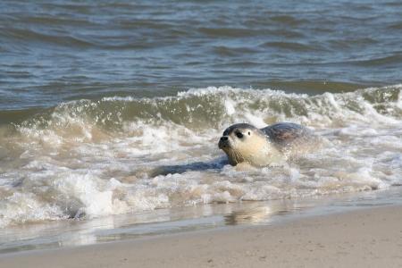 Nationalpark Wattenmeer: Einblick in eine Seehunde-Station