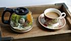 DIY Treibhaus: Der Dschungel in der Kaffeekanne
