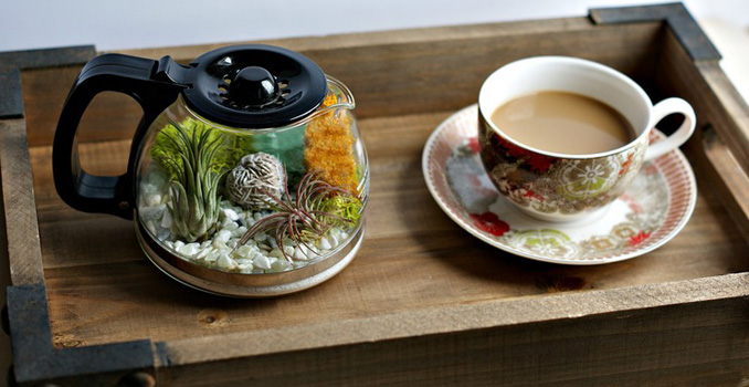 diy mini terrarium selber machen aus teekanne. Black Bedroom Furniture Sets. Home Design Ideas