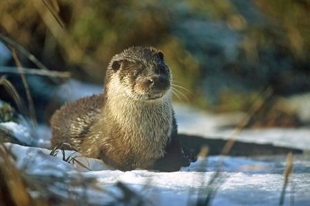 Tiere im Winter-Wald: Nachhaltige Überlebensstrategien