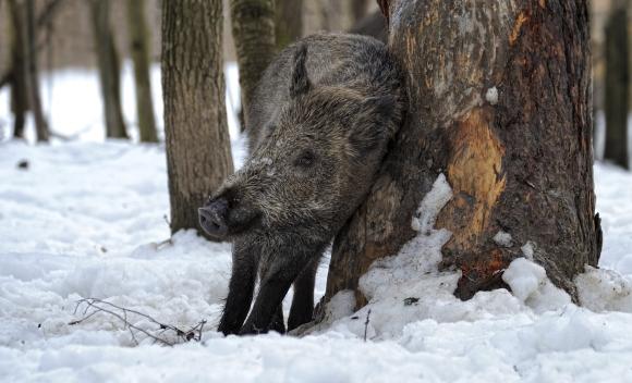 Wildtiere im Winter-Wald und ihre cleveren Überlebensstrategien