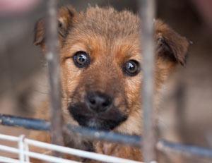 Tierpatenschaft statt eigenes Haustier