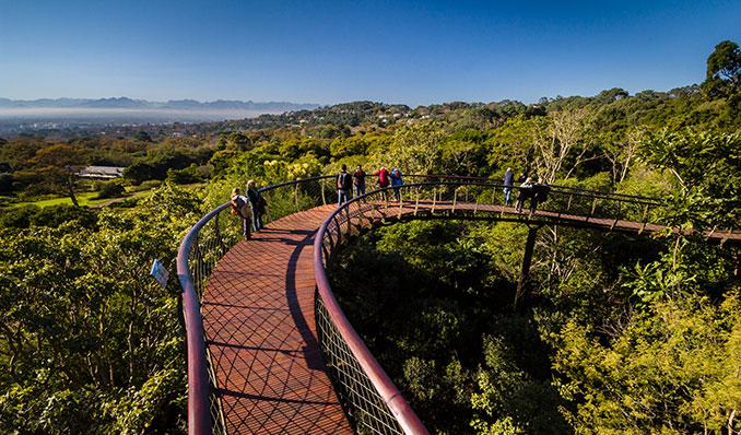 Baumschlange im National Garden in Südafrika