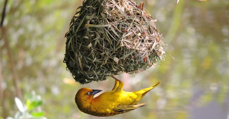 ?Frei wie ein Vogel? ? Beim Anblick eines Vogels gerät man schnell ins Träumen von Freiheit, Reisen und Unabhängigkeit.