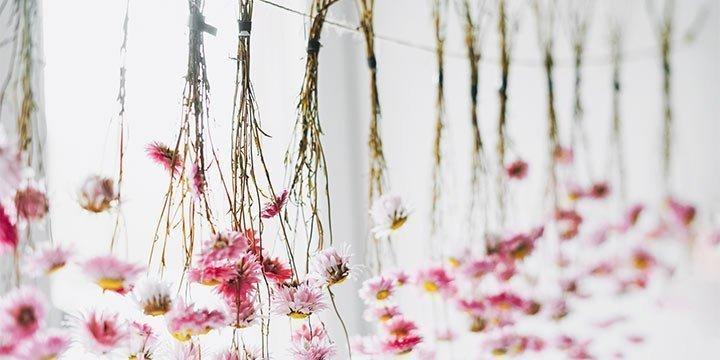 Trockenblumen: kaufen, basteln und verschenken