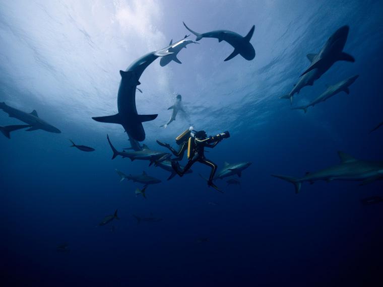 Unterwasseraufnahmen Jacques - Entdecker der Ozeane