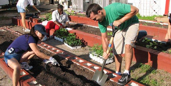 Urban Gardening: Gemüseanbau mitten in der Stadt