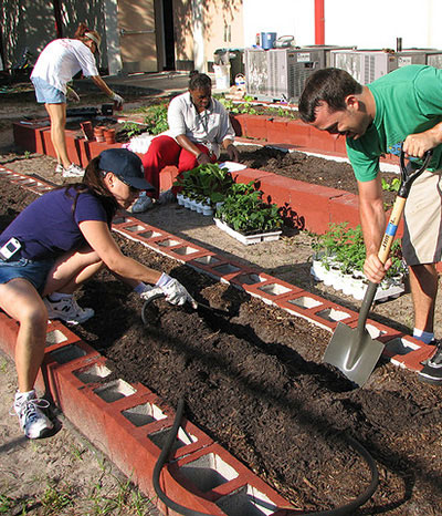Urban Gardening wird immer populärer