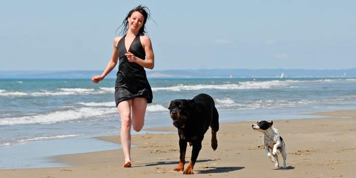 Ferien: Unternimm doch was mit Deinem Hund