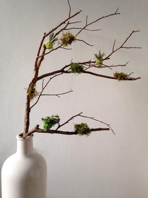 Duftender Zweig mit Moos- und Kräuterkugeln