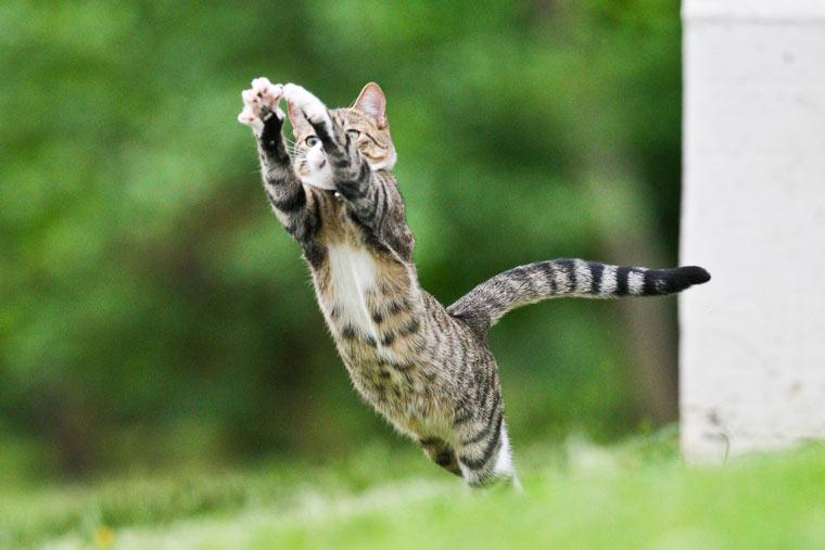 Katzen brauchen Auslauf und Bewegung
