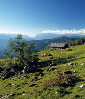 Die Almlandschaft im © SalzburgerLand