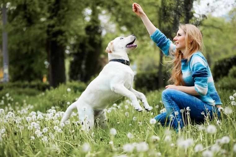 gesunde Trainingssnacks für Hunde