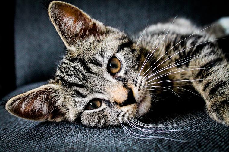 Was wir von Katzen lernen können